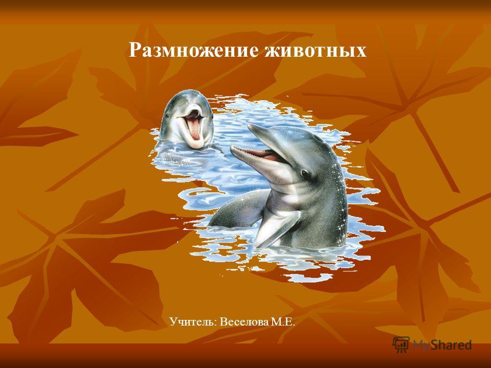 Размножение животных Учитель: Веселова М.Е.