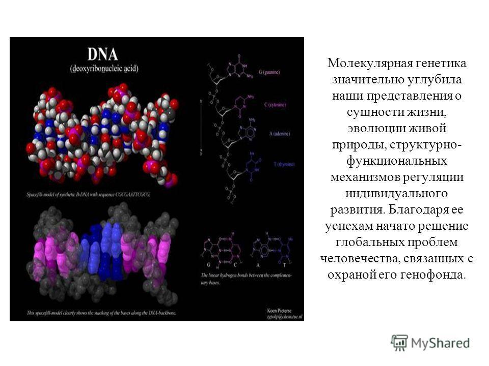 Молекулярная генетика значительно углубила наши представления о сущности жизни, эволюции живой природы, структурно- функциональных механизмов регуляции индивидуального развития. Благодаря ее успехам начато решение глобальных проблем человечества, свя