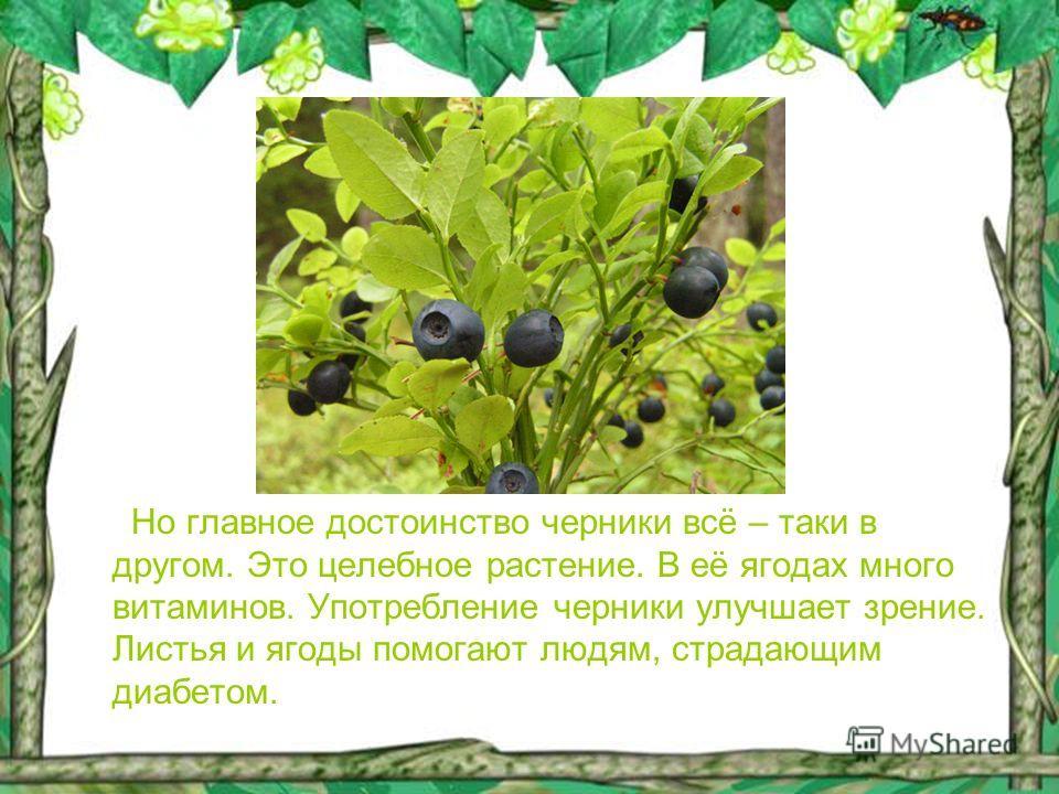Но главное достоинство черники всё – таки в другом. Это целебное растение. В её ягодах много витаминов. Употребление черники улучшает зрение. Листья и ягоды помогают людям, страдающим диабетом.
