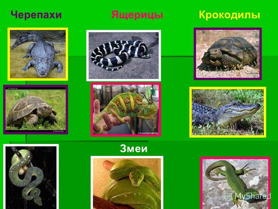Черепахи Змеи ЯщерицыКрокодилы