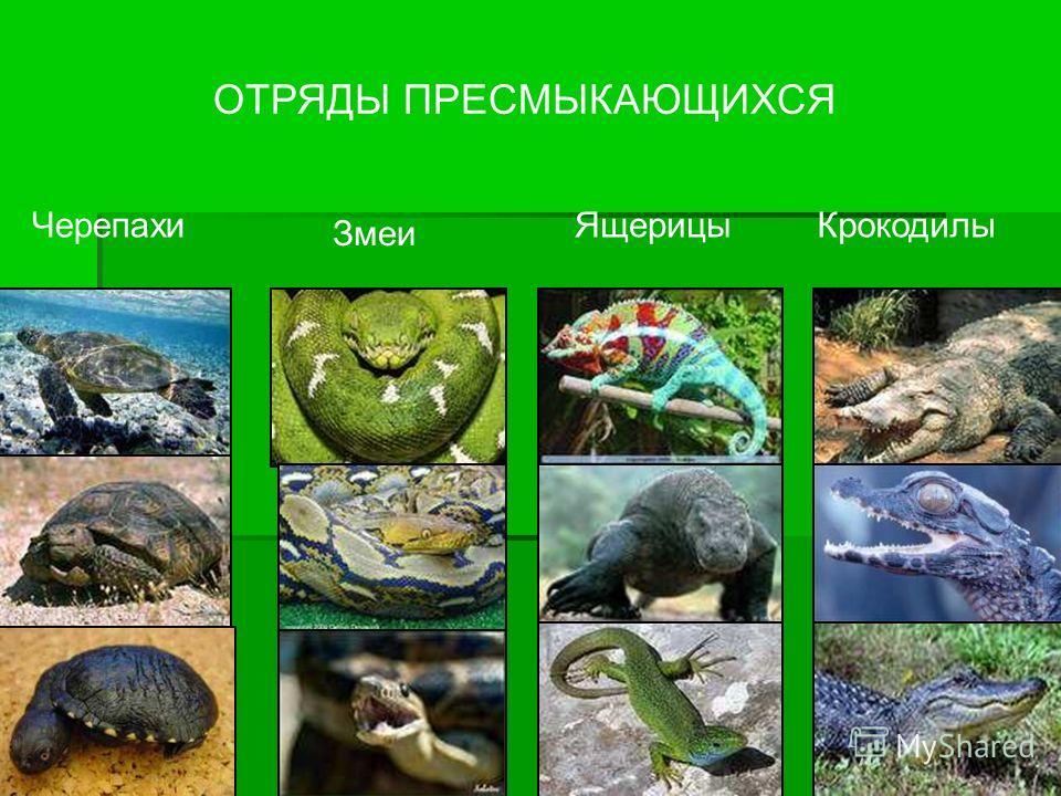 ОТРЯДЫ ПРЕСМЫКАЮЩИХСЯ Черепахи Змеи ЯщерицыКрокодилы