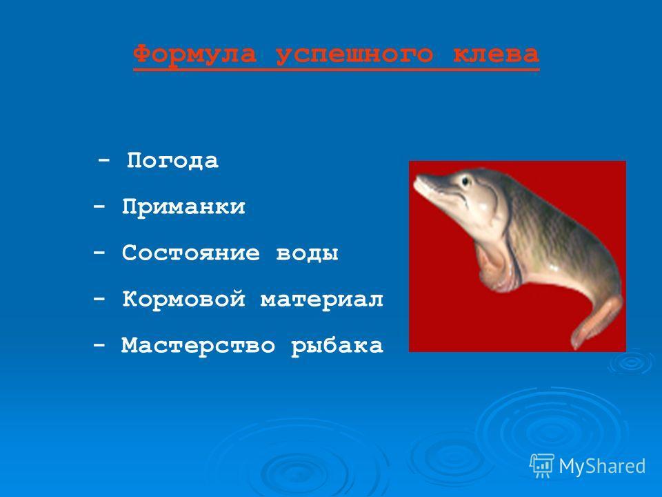 Формула успешного клева - Погода - Приманки - Состояние воды - Кормовой материал - Мастерство рыбака