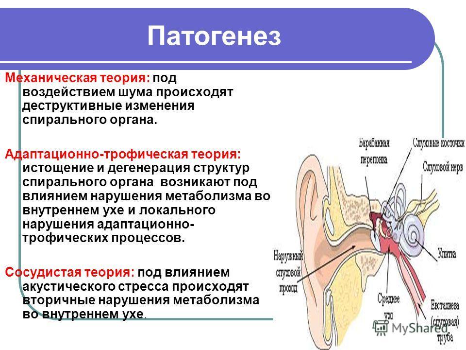 Патогенез Механическая теория: под воздействием шума происходят деструктивные изменения спирального органа. Адаптационно-трофическая теория: истощение и дегенерация структур спирального органа возникают под влиянием нарушения метаболизма во внутренне