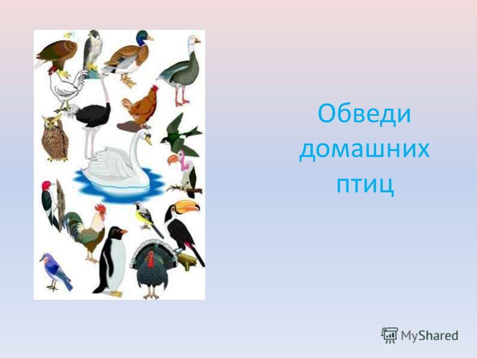 Обведи домашних птиц