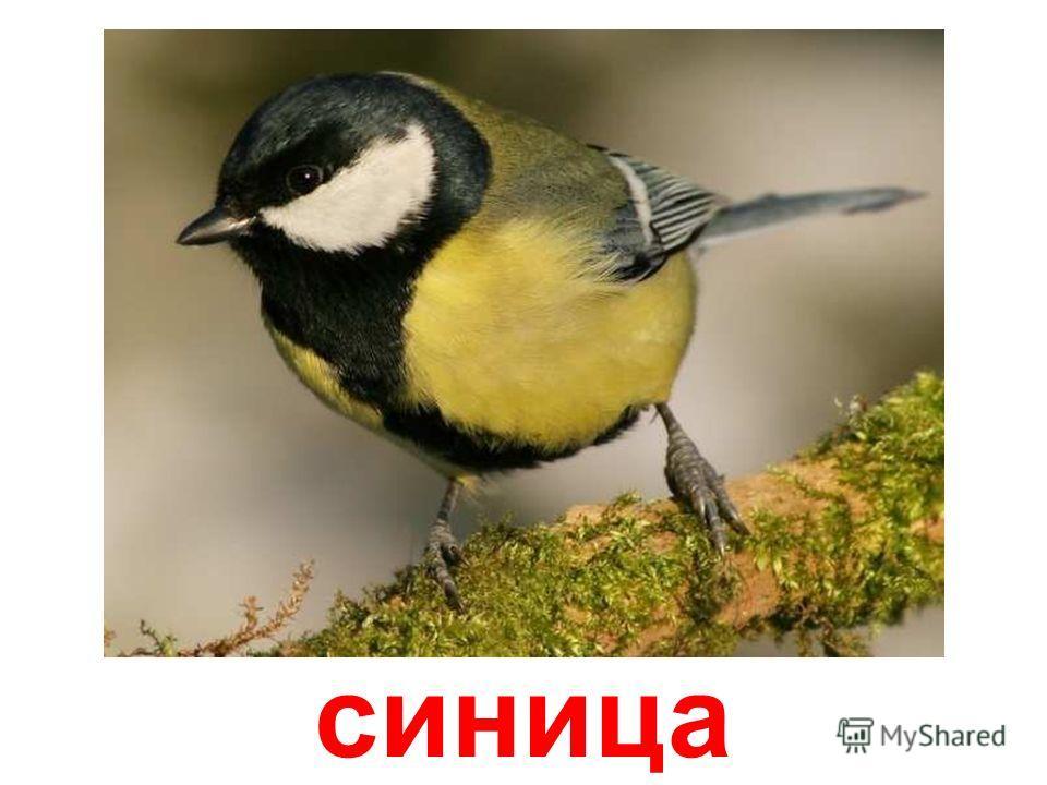Здравствуйте ребята, я Кар-карыч, ворон - зимующая птица, не боюсь морозов. А каких зимующих птиц вы знаете? Посмотрите, послушайте и запомните.