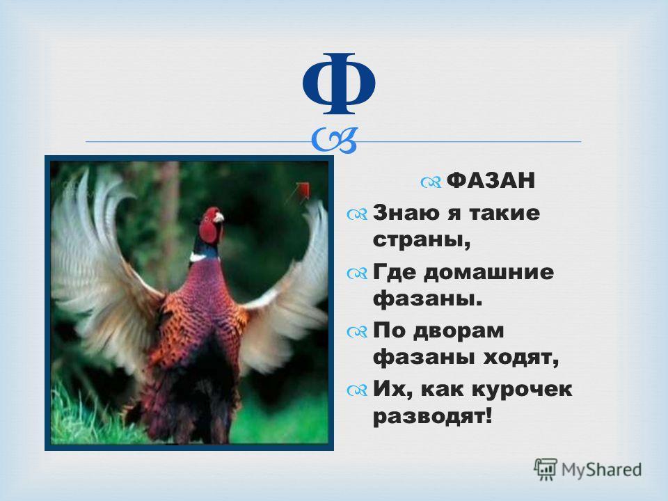 Ф ФАЗАН Знаю я такие страны, Где домашние фазаны. По дворам фазаны ходят, Их, как курочек разводят!
