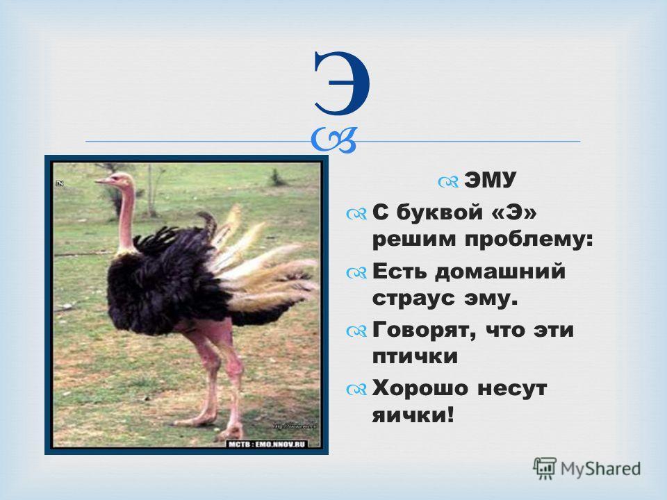 Э ЭМУ С буквой «Э» решим проблему: Есть домашний страус эму. Говорят, что эти птички Хорошо несут яички!