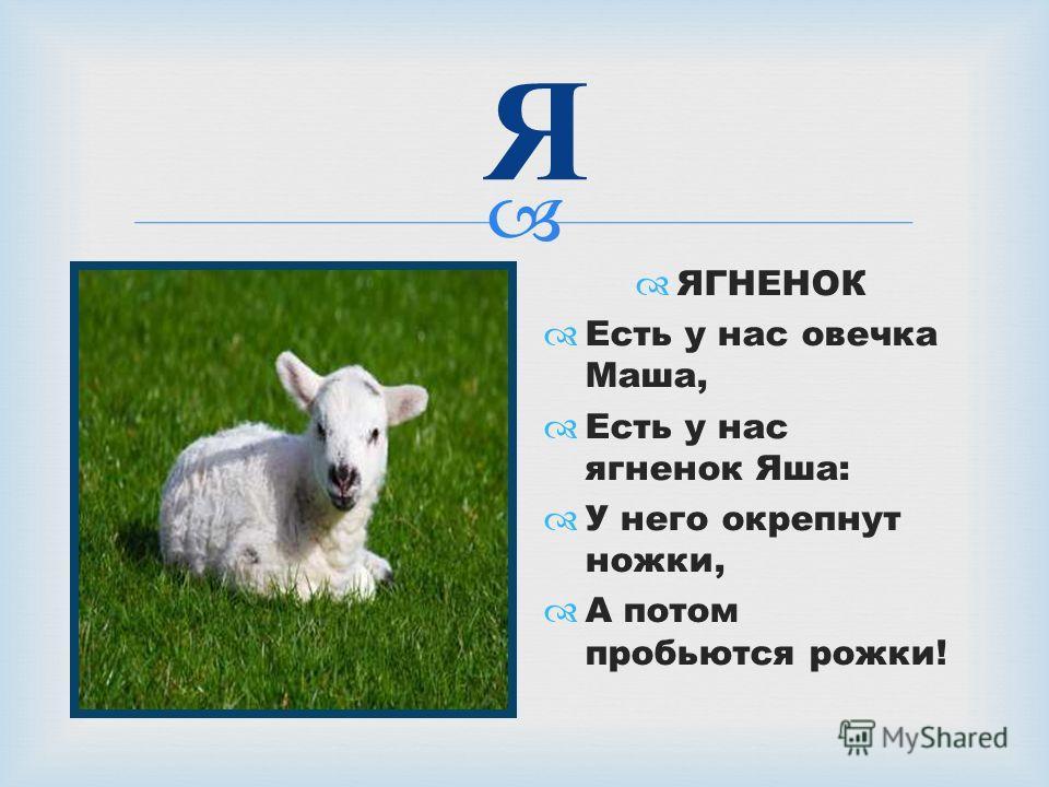 Я ЯГНЕНОК Есть у нас овечка Маша, Есть у нас ягненок Яша: У него окрепнут ножки, А потом пробьются рожки!