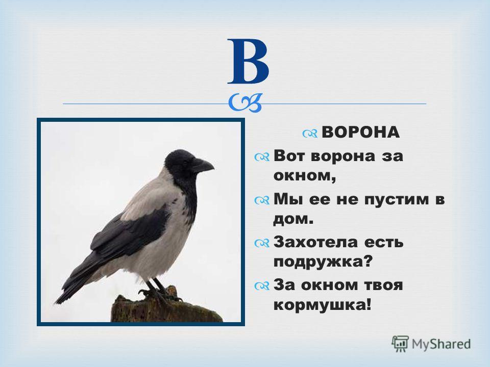 В ВОРОНА Вот ворона за окном, Мы ее не пустим в дом. Захотела есть подружка? За окном твоя кормушка!