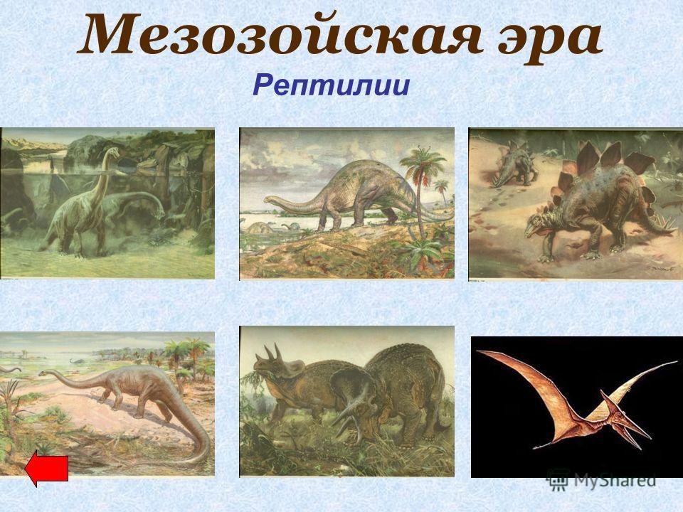Мезозойская эра Рептилии
