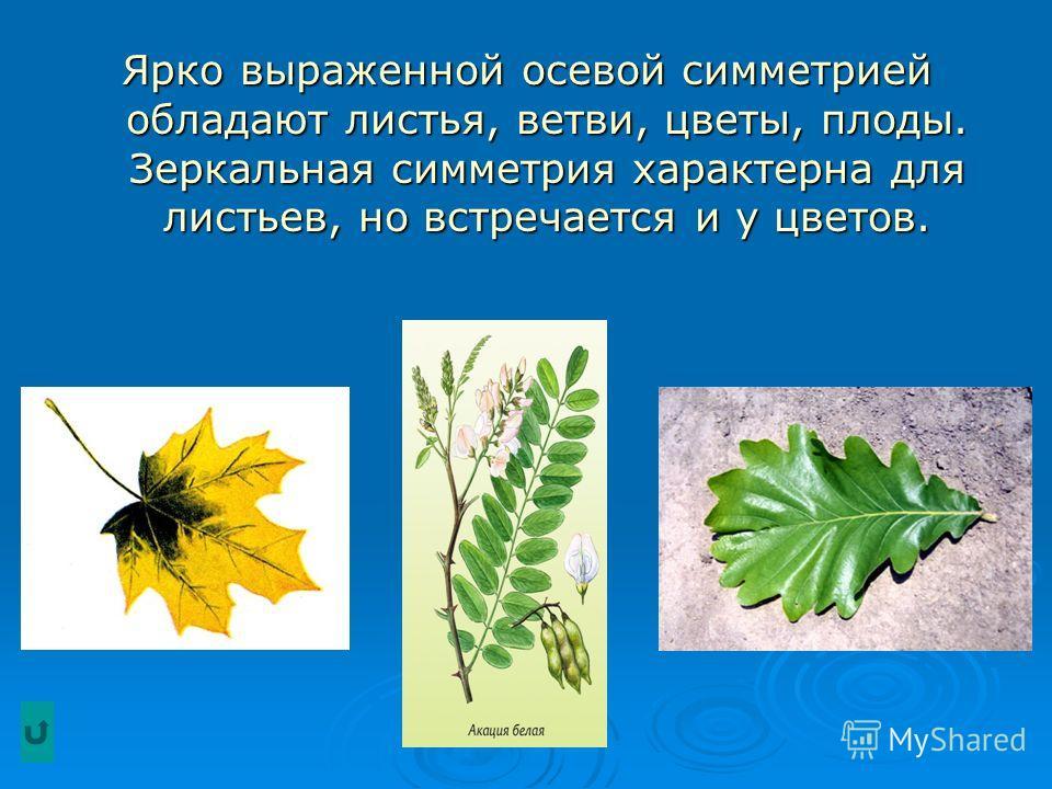 Ярко выраженной осевой симметрией обладают листья, ветви, цветы, плоды. Зеркальная симметрия характерна для листьев, но встречается и у цветов.