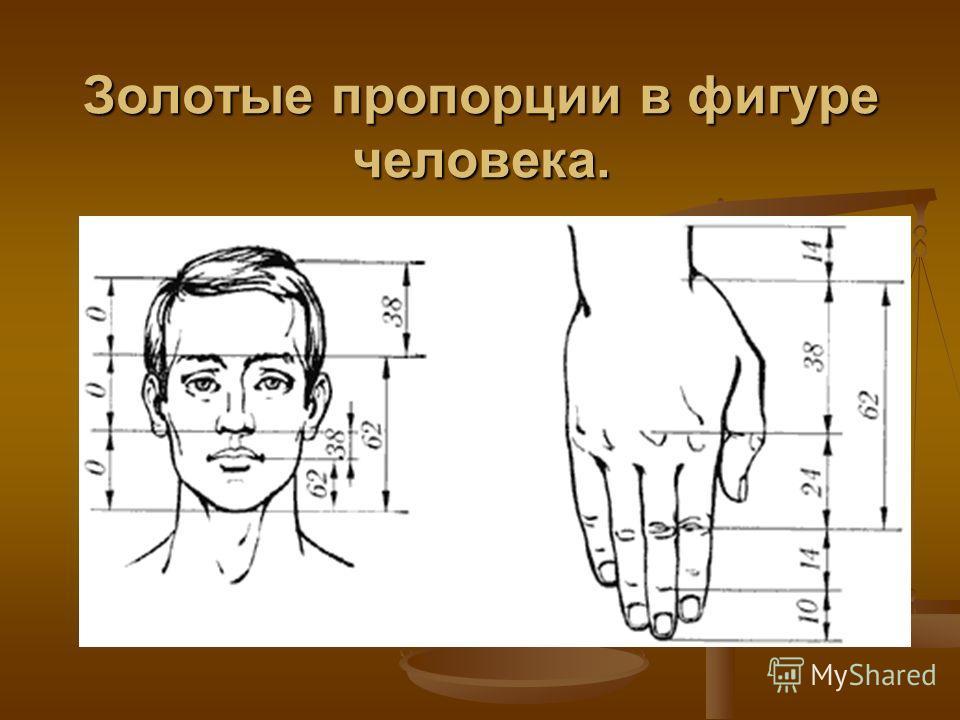 Золотые пропорции в фигуре человека.