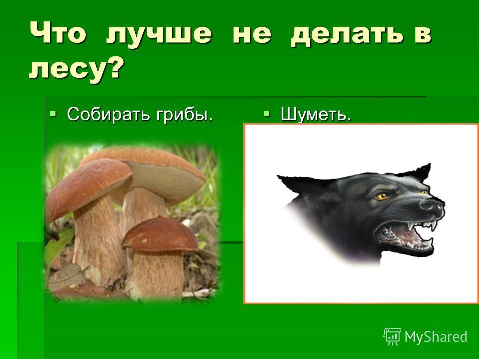 Что лучше не делать в лесу? Собирать грибы. Собирать грибы. Шуметь. Шуметь.