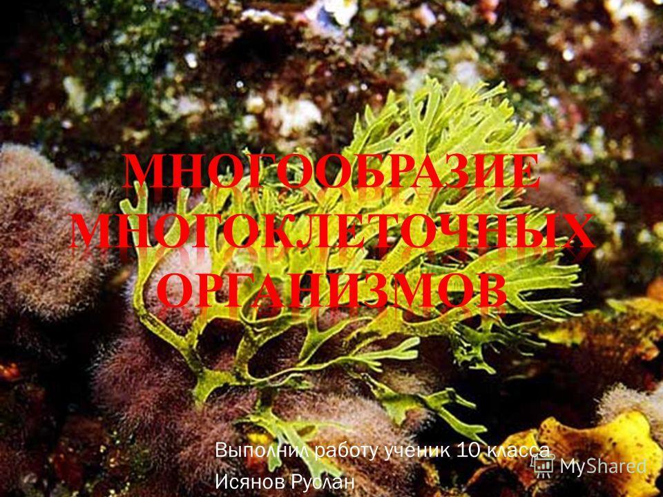Выполнил работу ученик 10 класса Исянов Руслан