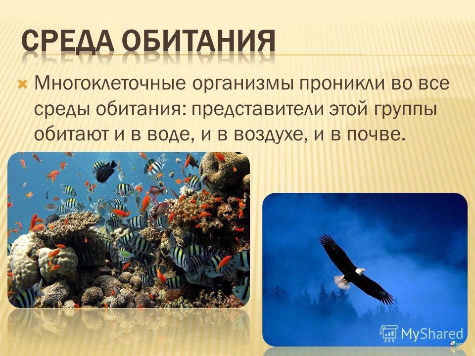 Многоклеточные организмы проникли во все среды обитания: представители этой группы обитают и в воде, и в воздухе, и в почве.