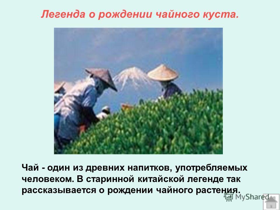 Легенда о рождении чайного куста. Чай - один из древних напитков, употребляемых человеком. В старинной китайской легенде так рассказывается о рождении чайного растения.