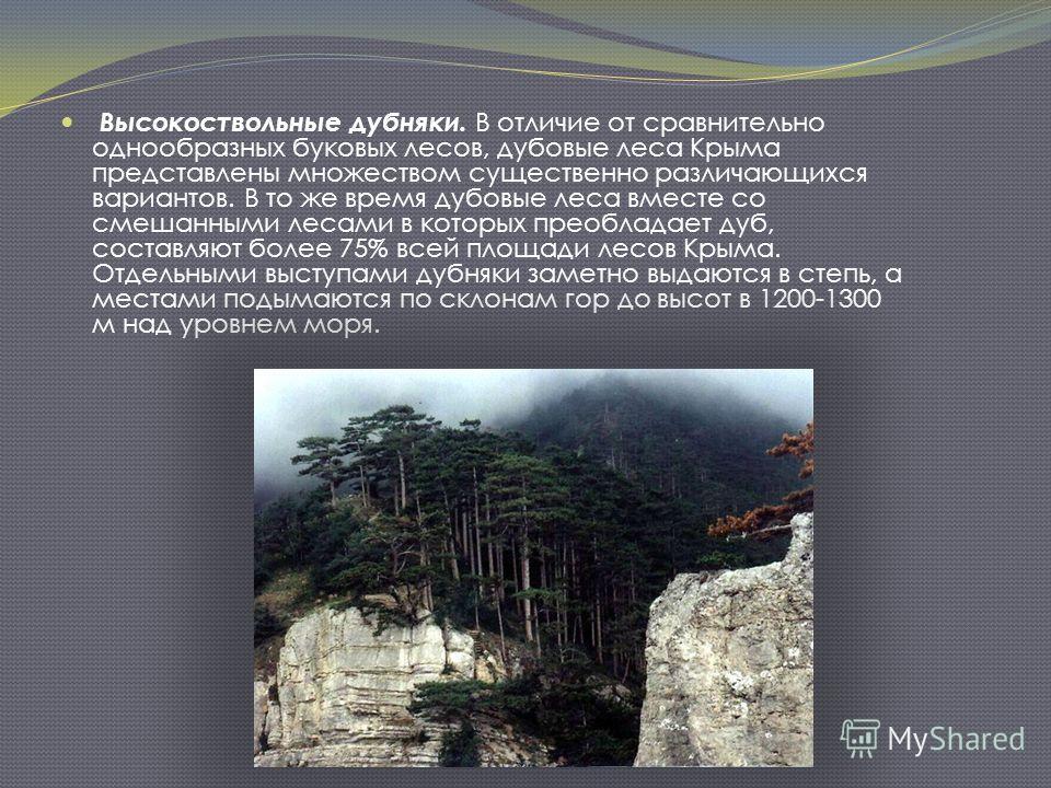 Высокоствольные дубняки. В отличие от сравнительно однообразных буковых лесов, дубовые леса Крыма представлены множеством существенно различающихся вариантов. В то же время дубовые леса вместе со смешанными лесами в которых преобладает дуб, составляю