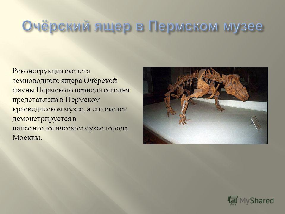 Самым крупным животным из обнаруженных пермских ящеров ученые считают Эстемменазуха. Это небольшое животное до полутора метра высоты и до двух метров длинны. Напоминает современного бегемота. Голова массивная с двумя рожками на макушке. Хвост напомин