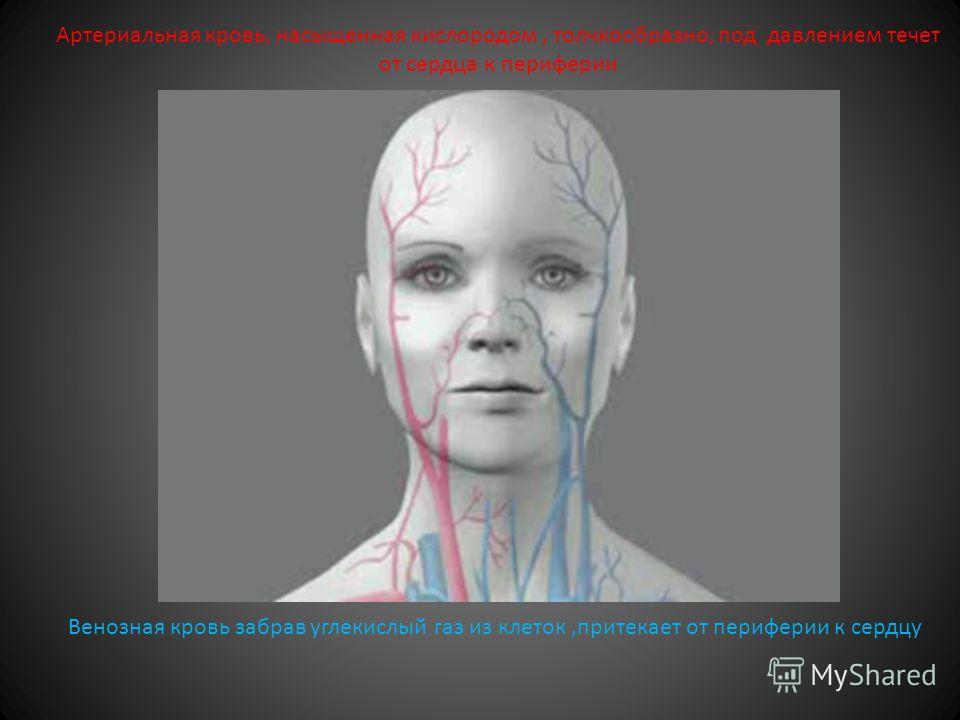 Виды кровотечения Артериальное Венозное Капиллярное Паренхиматозное