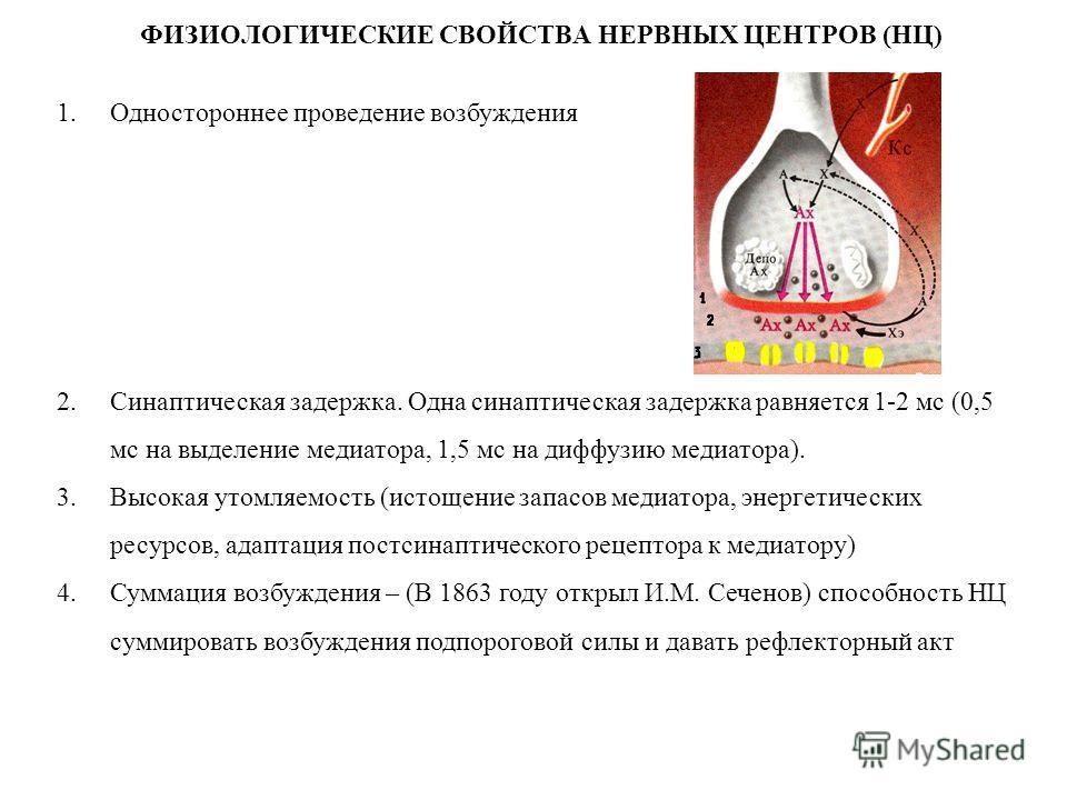 ФИЗИОЛОГИЧЕСКИЕ СВОЙСТВА НЕРВНЫХ ЦЕНТРОВ (НЦ) 1.Одностороннее проведение возбуждения 2.Синаптическая задержка. Одна синаптическая задержка равняется 1-2 мс (0,5 мс на выделение медиатора, 1,5 мс на диффузию медиатора). 3.Высокая утомляемость (истощен