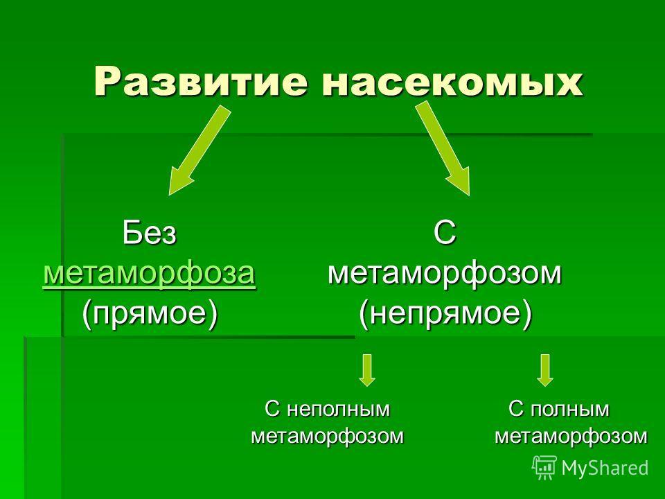 Развитие насекомых С полным метаморфозом Без метаморфоза метаморфоза (прямое) С метаморфозом (непрямое) С неполным метаморфозом