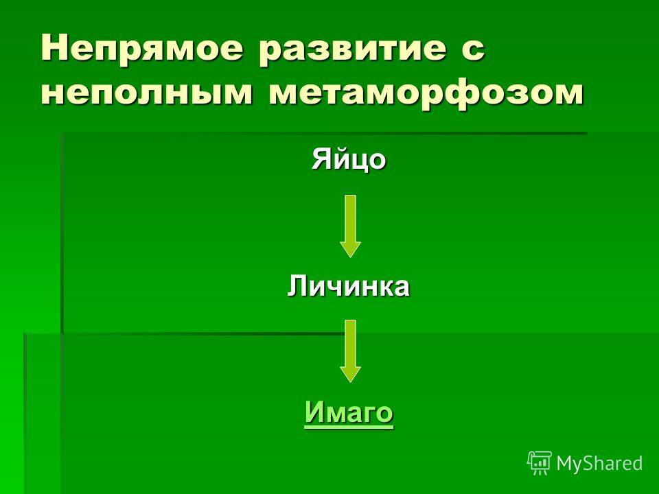 Непрямое развитие с неполным метаморфозом ЯйцоЛичинка Имаго