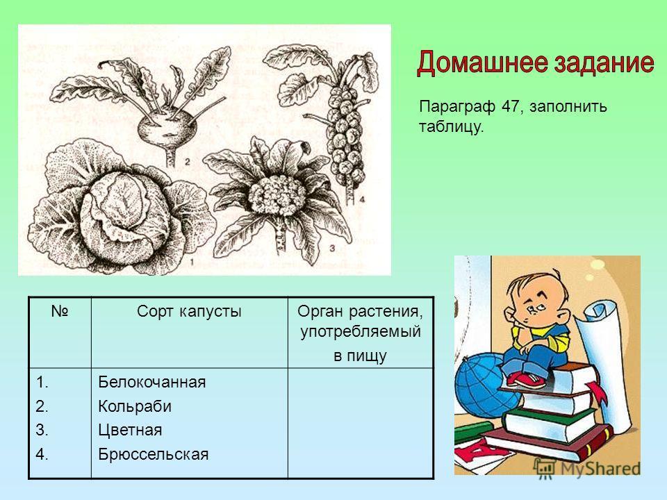 Сорт капустыОрган растения, употребляемый в пищу 1. 2. 3. 4. Белокочанная Кольраби Цветная Брюссельская Параграф 47, заполнить таблицу.