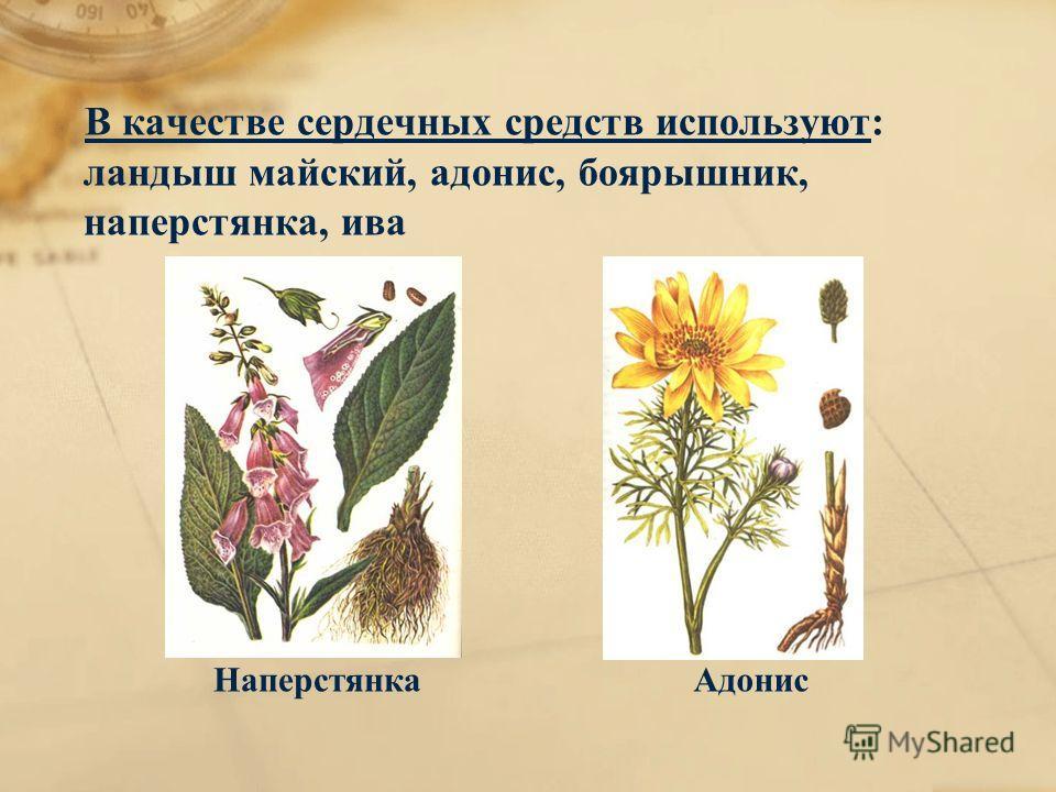 В качестве сердечных средств используют: ландыш майский, адонис, боярышник, наперстянка, ива НаперстянкаАдонис