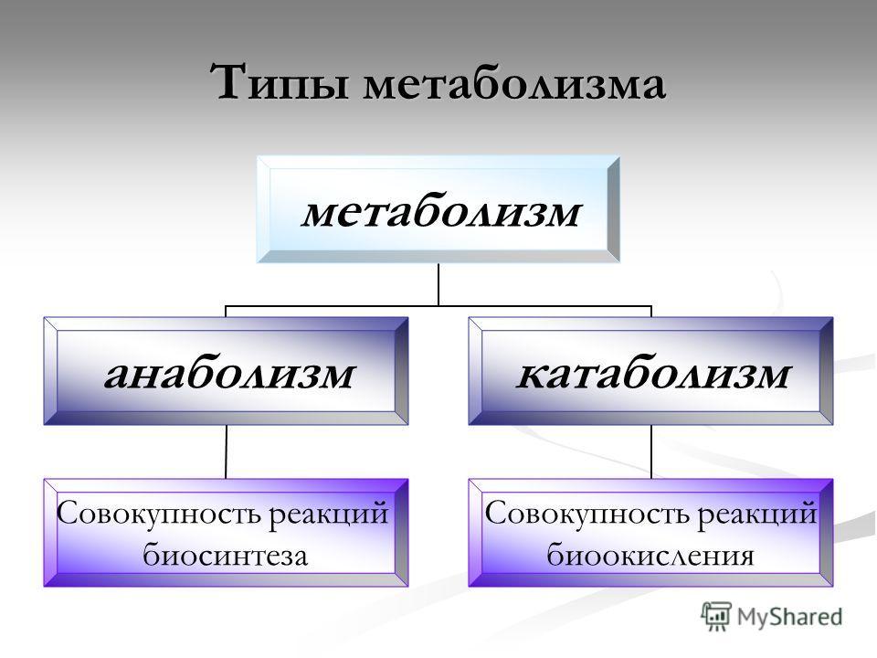 Типы метаболизма метаболизм анаболизм Совокупность реакций биосинтеза катаболизм Совокупность реакций биоокисления