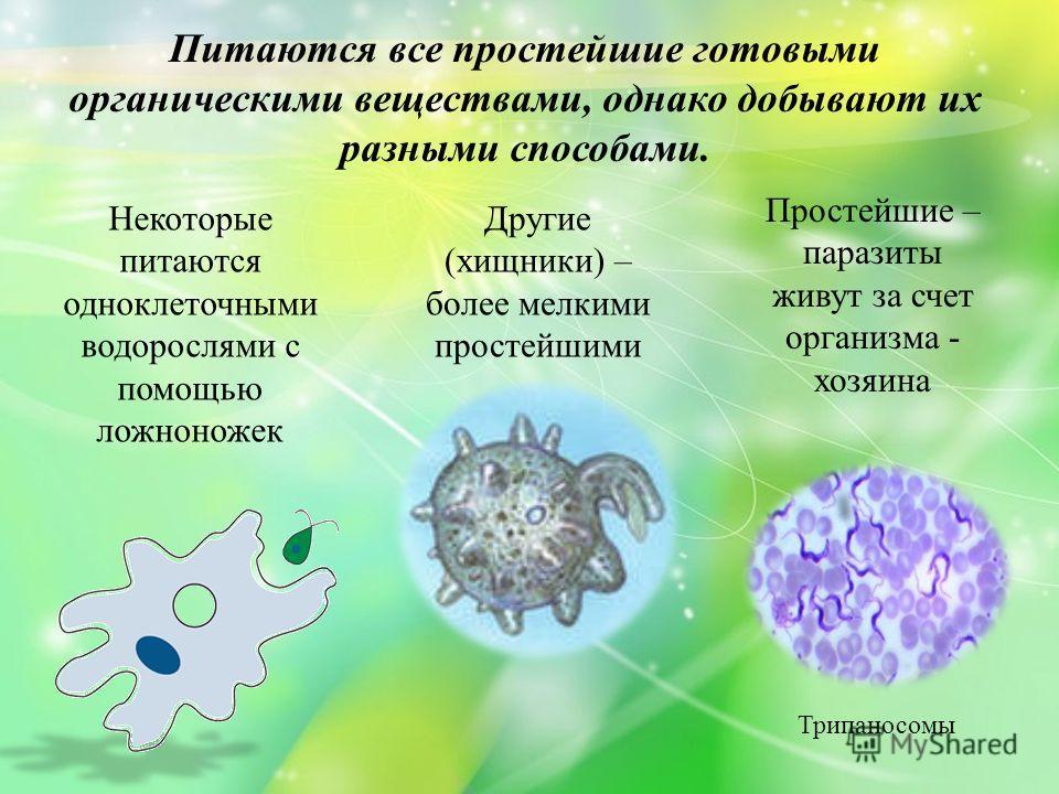 Питаются все простейшие готовыми органическими веществами, однако добывают их разными способами. Некоторые питаются одноклеточными водорослями с помощью ложноножек Другие (хищники) – более мелкими простейшими Простейшие – паразиты живут за счет орган