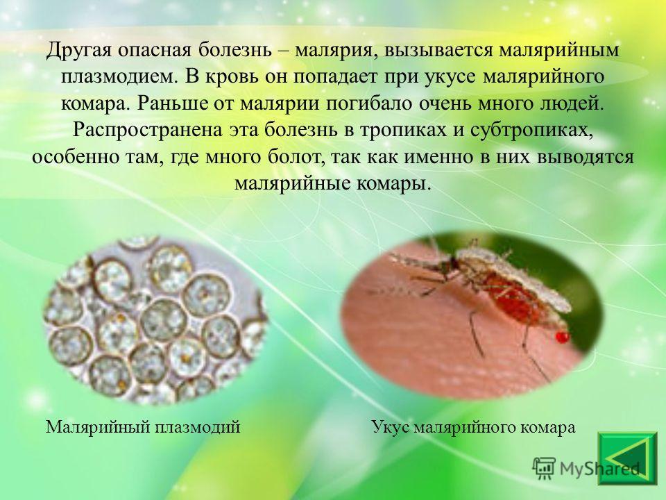 Другая опасная болезнь – малярия, вызывается малярийным плазмодием. В кровь он попадает при укусе малярийного комара. Раньше от малярии погибало очень много людей. Распространена эта болезнь в тропиках и субтропиках, особенно там, где много болот, та