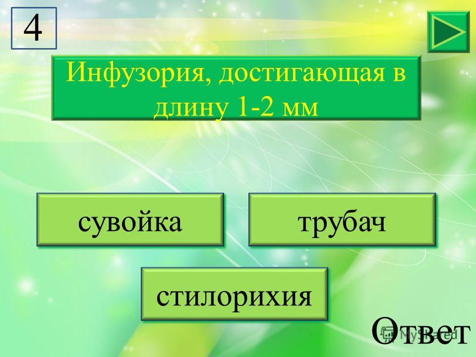 Инфузория, достигающая в длину 1-2 мм сувойка трубач стилорихия 4 Ответ