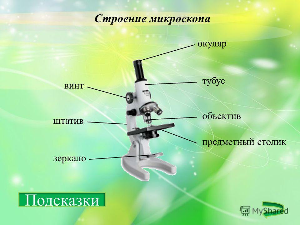 Строение микроскопа окуляр объектив тубус винт штатив зеркало предметный столик Подсказки