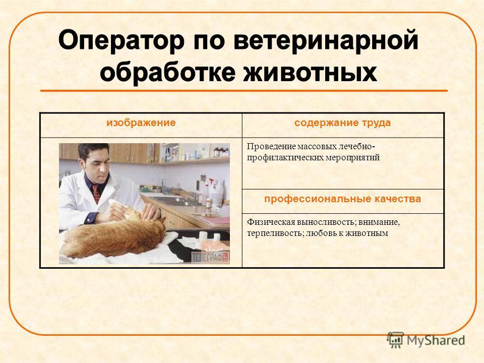 изображениесодержание труда Проведение массовых лечебно- профилактических мероприятий профессиональные качества Физическая выносливость; внимание, терпеливость; любовь к животным