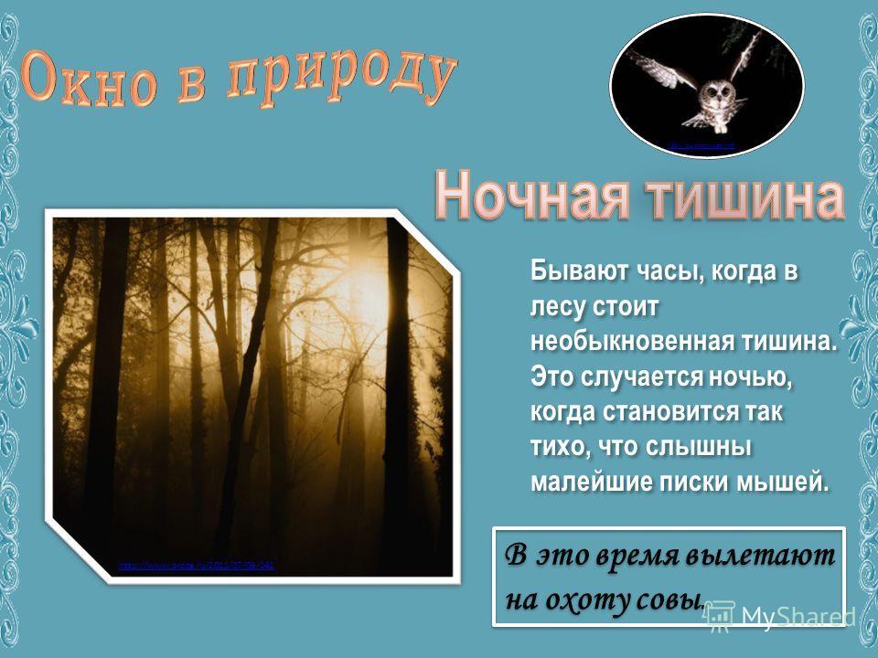 Бывают часы, когда в лесу стоит необыкновенная тишина. Это случается ночью, когда становится так тихо, что слышны малейшие писки мышей. http://ourzoo.ru/zoo.html http://www.proza.ru/2011/07/09/141
