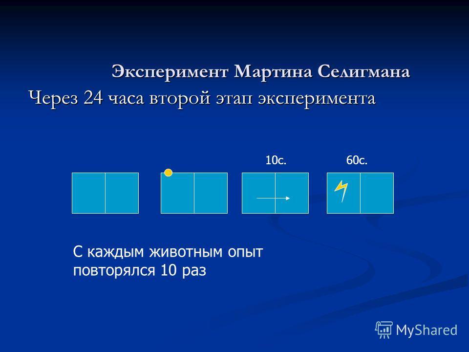 Через 24 часа второй этап эксперимента Эксперимент Мартина Селигмана 10с.60с. С каждым животным опыт повторялся 10 раз