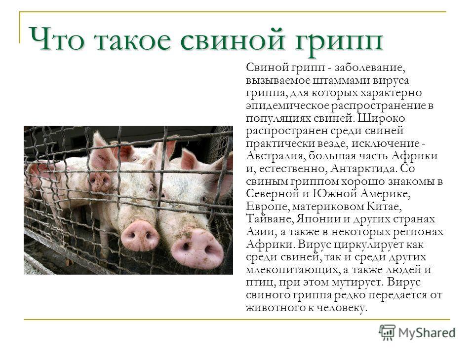 Что такое свиной грипп Свиной грипп - заболевание, вызываемое штаммами вируса гриппа, для которых характерно эпидемическое распространение в популяциях свиней. Широко распространен среди свиней практически везде, исключение - Австралия, большая часть
