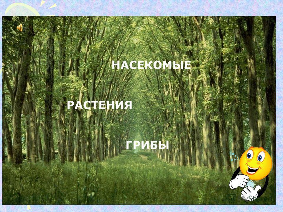 1.Не нарушать моховый ковёр под деревьями. 2.Не вырывать вместе с грибницей. 3.Грибы срезаются ножиком! 4.Сырыми гриб есть НЕЛЬЗЯ!!!!!