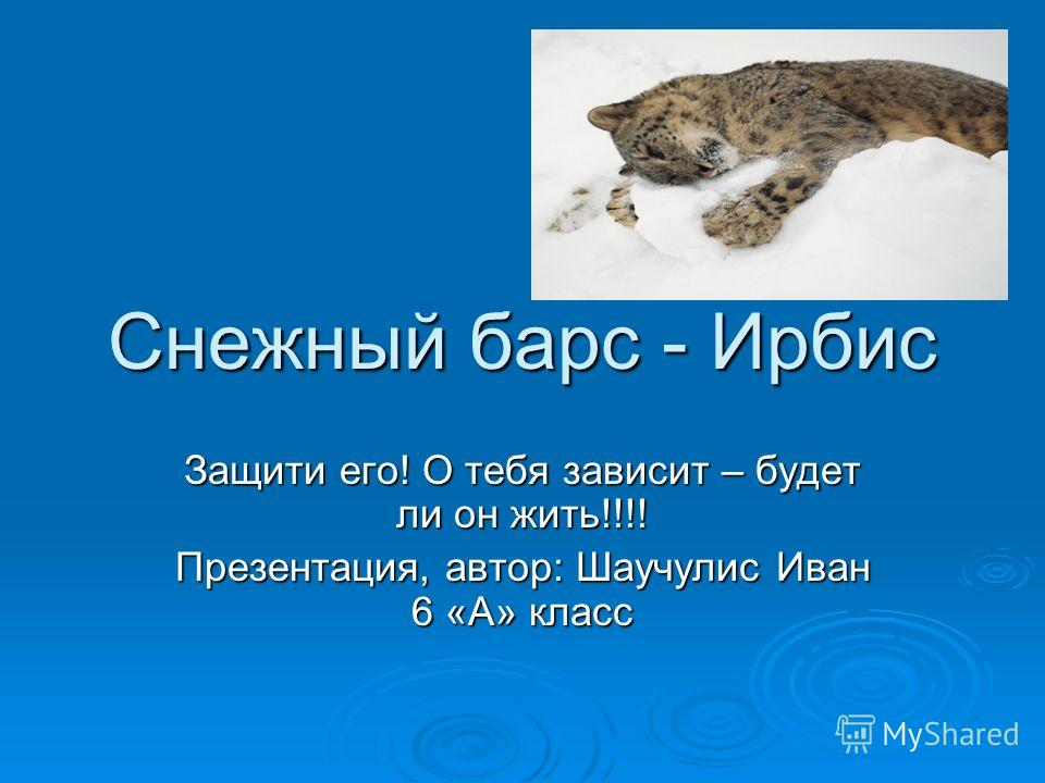 Снежный барс - Ирбис Защити его! О тебя зависит – будет ли он жить!!!! Презентация, автор: Шаучулис Иван 6 «А» класс