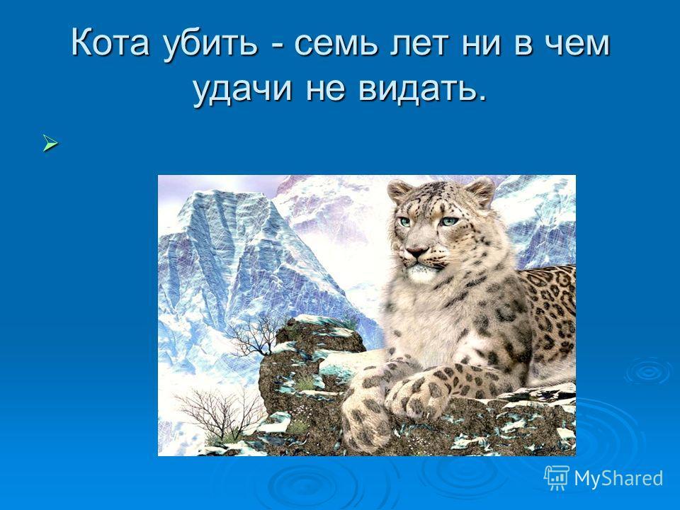 Кота убить - семь лет ни в чем удачи не видать.