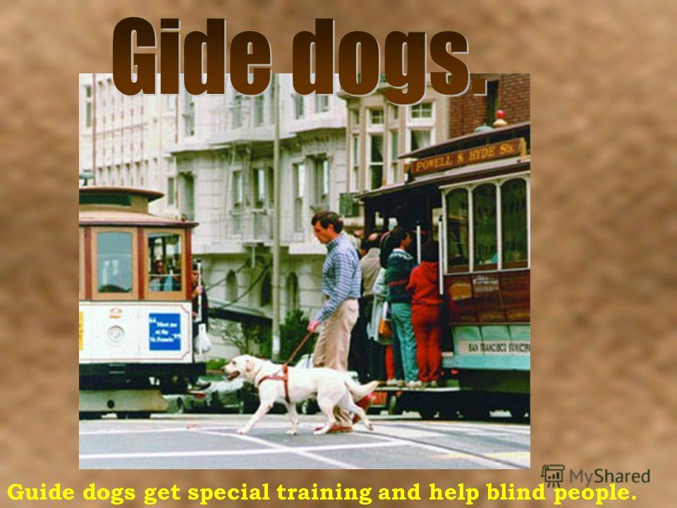 Guide dogs get special training and help blind people.