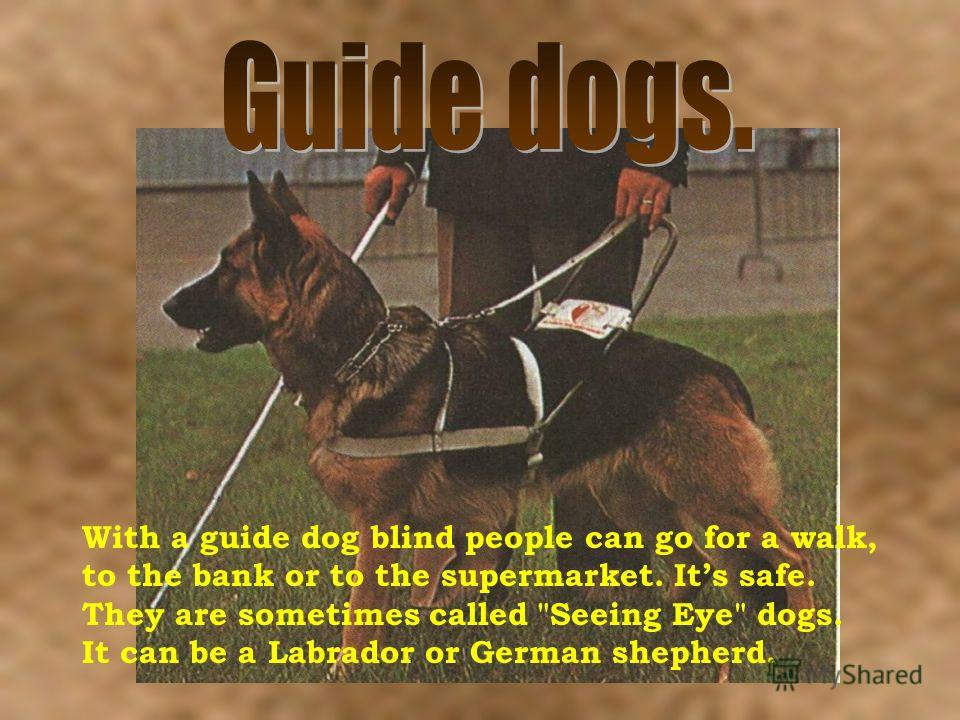 With a guide dog blind people can go for a walk, to the bank or to the supermarket. Its safe. They are sometimes called Seeing Eye dogs. It can be a Labrador or German shepherd.