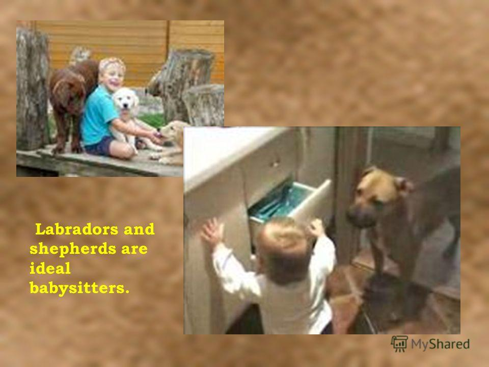 Labradors and shepherds are ideal babysitters.