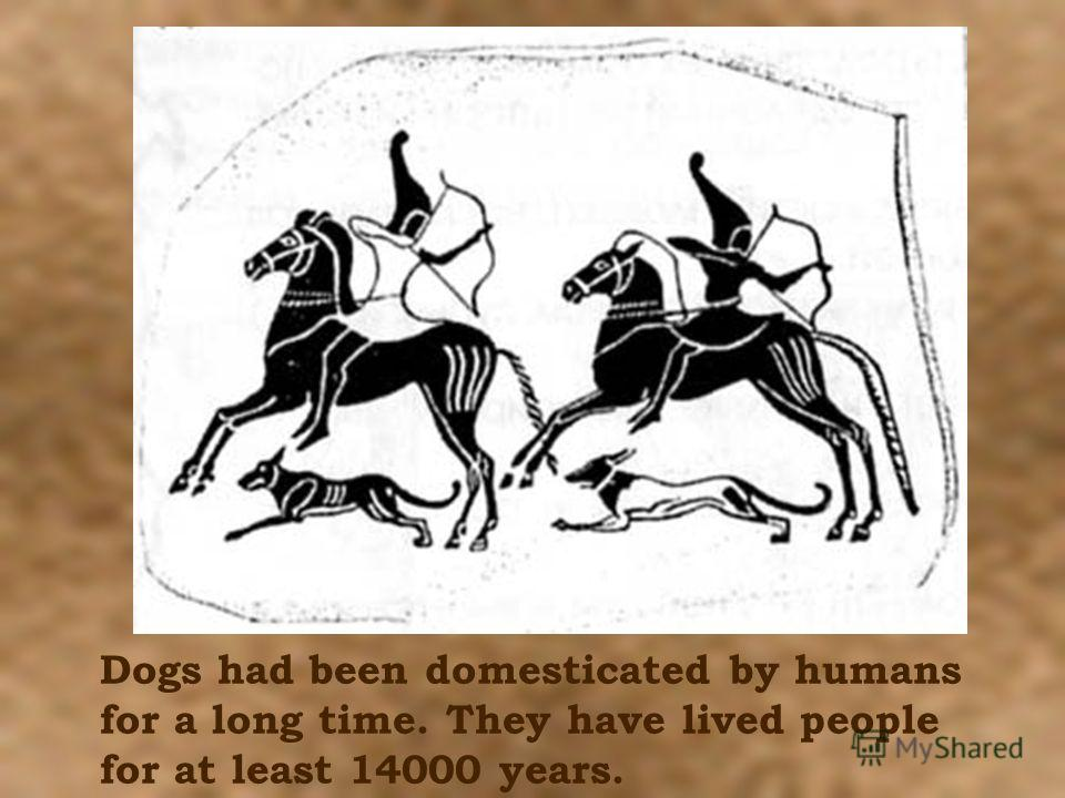 Dogs had been domesticated by humans for a long time. They have lived people for at least 14000 years.