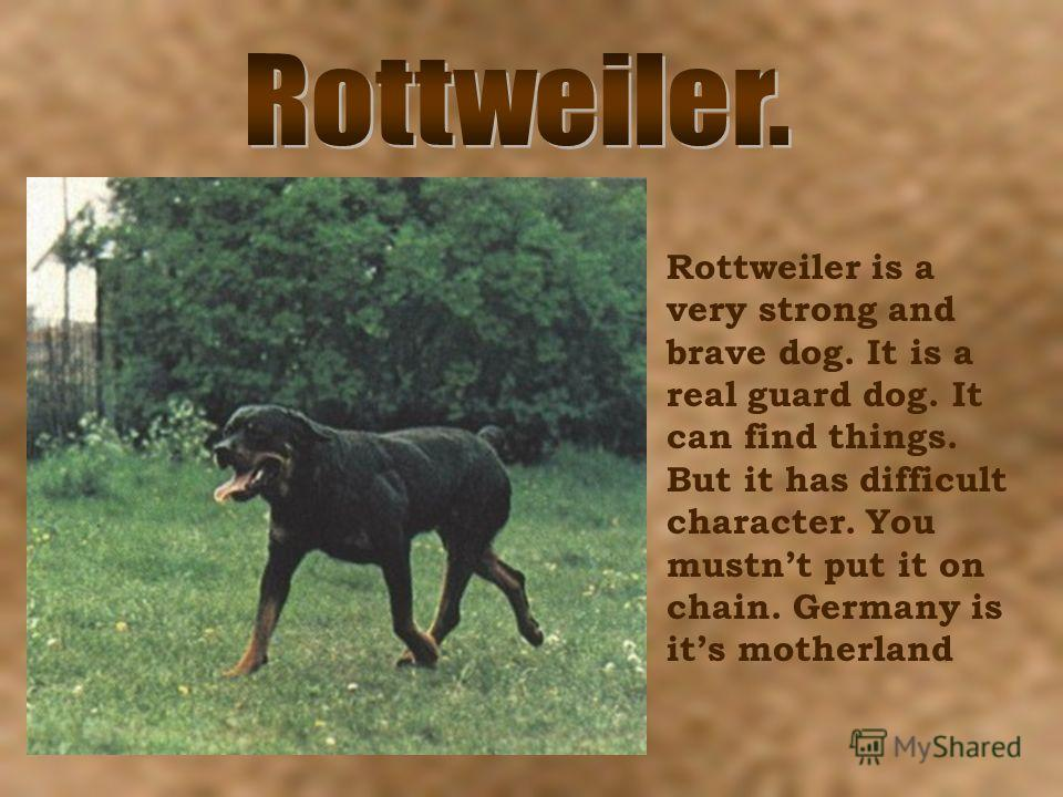 Rottweiler is a very strong and brave dog. It is a real guard dog. It can find things. But it has difficult character. You mustnt put it on chain. Germany is its motherland