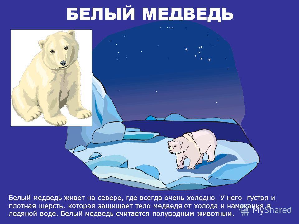 ДИКИЕ ЖИВОТНЫЕ ДИКИЕ ЖИВОТНЫЕ «Белый медведь, верблюд, обезьяна» часть 2 Детская Электронная Книга