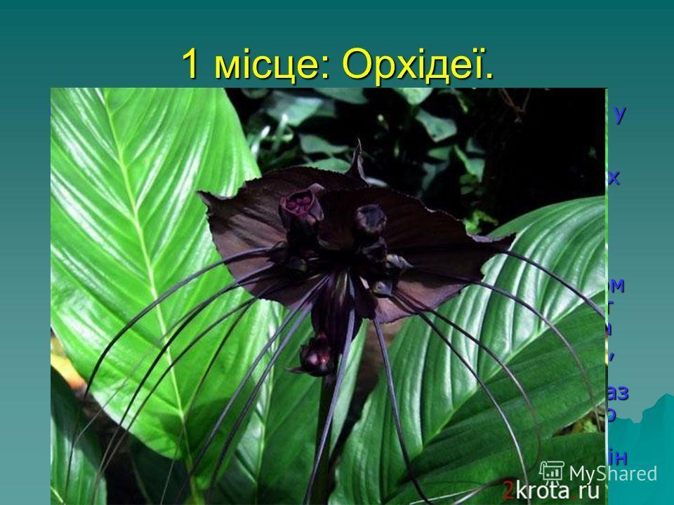 1 місце: Орхідеї. Сімейство цих рослин - одне з найчисленніших у світі. Воно налічує більше 25 тисяч видів, більшість з яких росте на деревах, але, на відміну від рослин-паразитів, використовує їх тільки як опору. Це рослина на подив невибагливо, а п