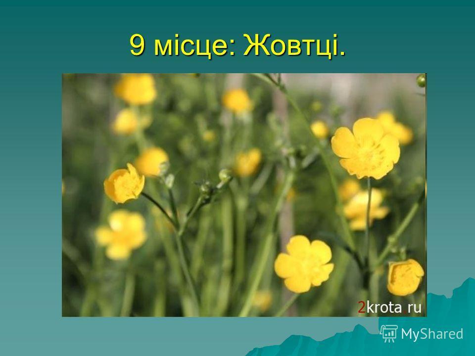 9 місце: Жовтці. На думку народу, ця трава має суворий характер - звідси і назва. Ця квітка - сама високогірна Європи - зустрічається на висоті до 4 300 метрів над рівнем моря. Жовтців Ranunculus lobatus знаходили на висоті до 6 400 метрів над рівнем