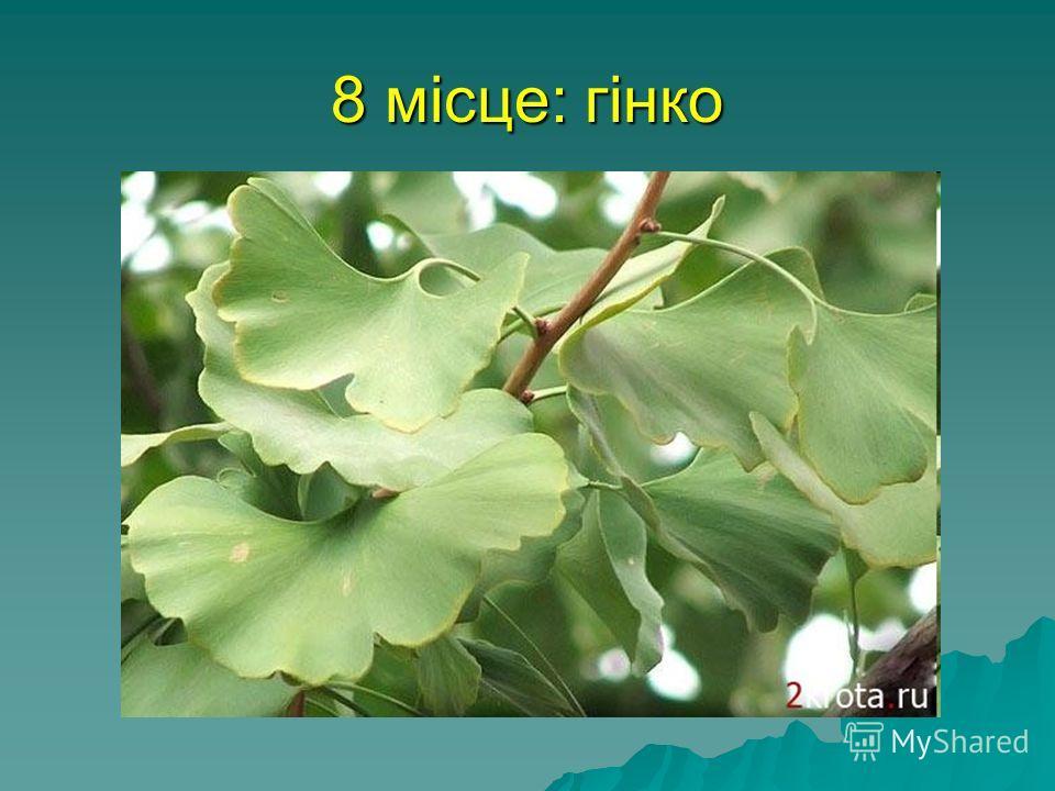 8 місце: гінко Саме древнє нині зростаюче дерево - це гинко, Чжэцзян, що росте в китайській провінції. Цей вид виник ще в юрський період, близько 160 млн років назад. У Японії гинко називається Срібною абрикосою.