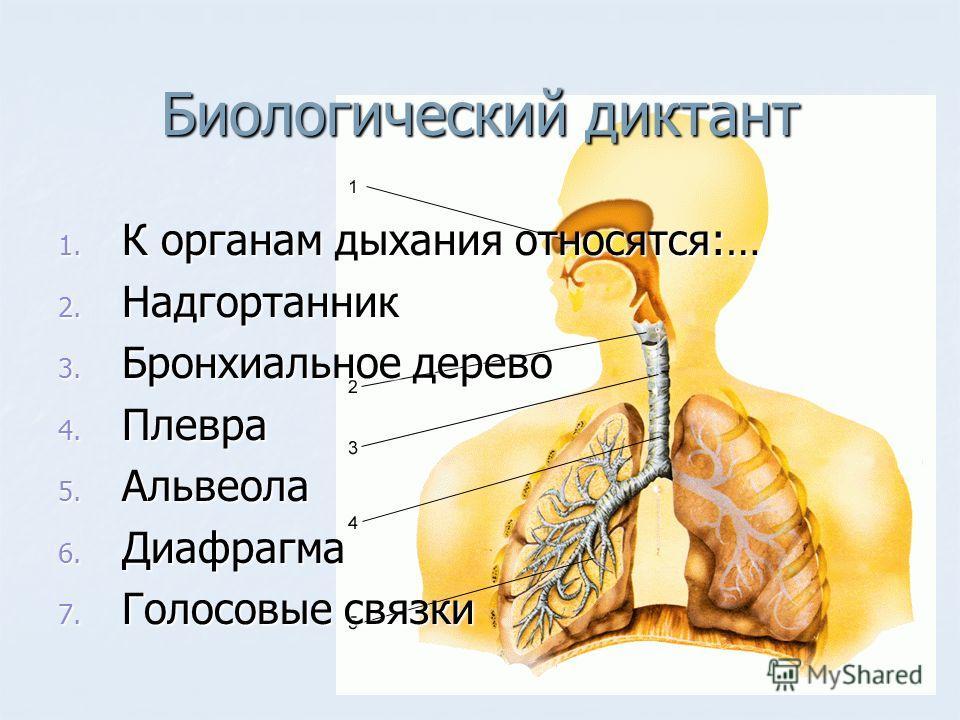 Биологический диктант 1. К органам дыхания относятся:… 2. Надгортанник 3. Бронхиальное дерево 4. Плевра 5. Альвеола 6. Диафрагма 7. Голосовые связки